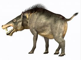pic of omnivore  - Entelodon was an omnivorous pig that lived in Europe and Asia in the Eocene through the Oligocene Periods - JPG