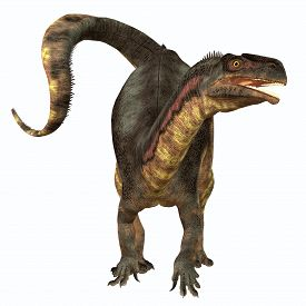 picture of herbivore  - Plateosaurus was a prosauropod herbivorous dinosaur that lived in the Triassic Age of Europe - JPG