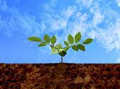 Green shoot, soil & cloudy blue sky