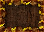 Autumn background with frame, leaves and bark