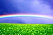 Campo de grama verde sobre o céu de arco-íris