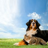stock photo of cat dog  - Dog and cat together on grass - JPG