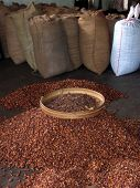 Cacao Beans In Indonesiah