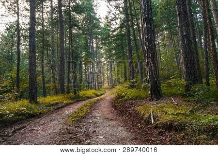 Cycling Through Forest On A