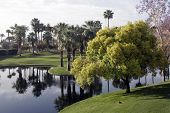 Palm Desert Golf Course And Reflections