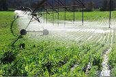 Pivot irrigation system watering a farm field