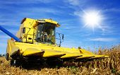 Yellow combine harvesting maize on a farm