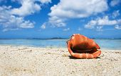 Tropical island beach with a beautiful sea shell