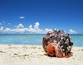 Beautiful sea shell on a tropical island beach