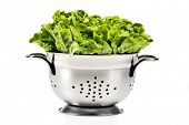 Healthy fresh butter lettuce in a strainer