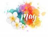 Abstract Background With Watercolor Colorful Splashes And Frangipani (plumeria) Flowers. Hello May H poster