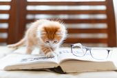 Little Adorable Sunny Fluffy Cute Ginger Cat Carefully Reading The Book, On Top Of Book Lying Glasse poster