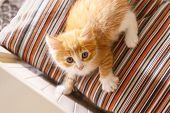 Photo Of Little Adorable Sunny Fluffy Ginger Cat With Blue Eyes Lying On A Striped Pillow And Lookin poster