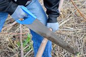 Sawing With A Hand Saw Of A Wood Branch. Man Saws Sawing A Tree Branch. Wood Sawing With A Hand Saw. poster