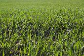 Bright Green Grass Field