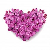 stock photo of valentines day  - Flowers of a lilac in the form of a heart - JPG