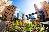 Flower Bed And Square In Downtown Of City Chicago poster