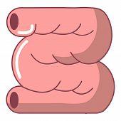 Large Intestine Icon. Cartoon Illustration Of Large Intestine Icon For Web Design Isolated On White  poster