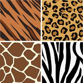 picture of leopard  - Seamless tiling animal print patterns of tiger leopard giraffe and zebra - JPG