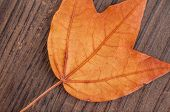Autumn leaf on textured wood background