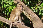 Monkey Sitting On The Tree,