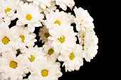 image of condolence  - Beautiful white chrysanthems - JPG