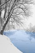River And Tree Covered With Snow