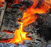 Wild fire. Fire insurance concept.
