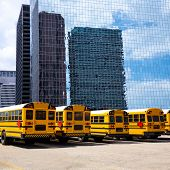 American school bus rear view in a row at Houston skyline photo mount
