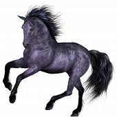 Постер, плакат: Красивая лошадь