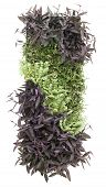 Living Wall Garden Isolated on White Background