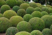 Green garden balls in France