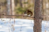 stock photo of inquisition  - A wild squirrel looks inquisitively in Itasca State Park in Minnesota USA - JPG