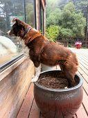 Dog On A Pot
