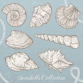Seashells collection.