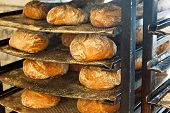 Freshly baked artisanal rustic bread loafs