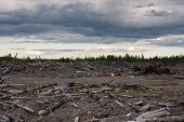 Logs Debris