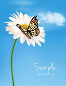 Nature background with daisy flower and butterfly. Vector illustration.