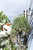 foto of cherry-picker  - Electrician worker in cherry picker solve palm leaf and protect a wire of the power line - JPG