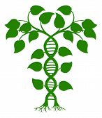 stock photo of biotech  - Green tree illustration with the trees or vines forming a DNA double helix - JPG