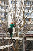 Workman On Articulated High Platform Trimming Branches Of Tree.