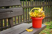 leaves in a plastic bucket standing on the bench