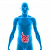 stock photo of gastrointestinal  - There are several organs and other components involved in the digestion of food and the largest structure of the digestive system is the gastrointestinal tract - JPG