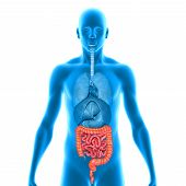 stock photo of gastrointestinal  - The human gastrointestinal tract is an organ system responsible for consuming and digesting foodstuffs - JPG