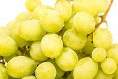 Closeup Of Wet Green Seedless Grapes