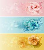 Set Of Floral Design