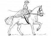 vector - women - Historical Horse Riding