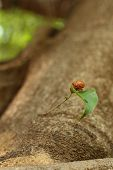 Cicada On The Tree In The Nature.