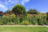 stock photo of primrose  - Yellow Evening Primrose Runner Beans Broad beans and herbs in an English Country Garden - JPG