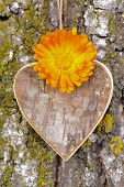 wooden heart at tree